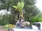 New Zealand tree fern being loaded into Ford Ranger